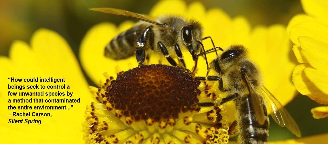 bees slider