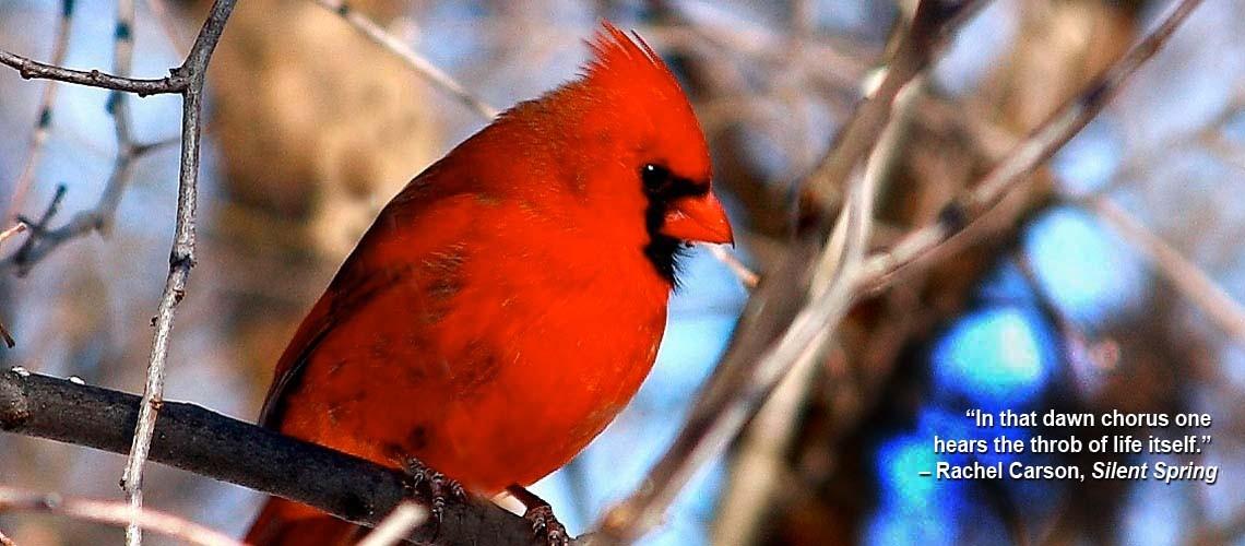 cardinal slider