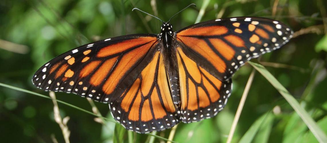 monarch_slider