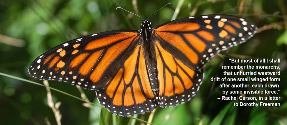 monarch_slider2