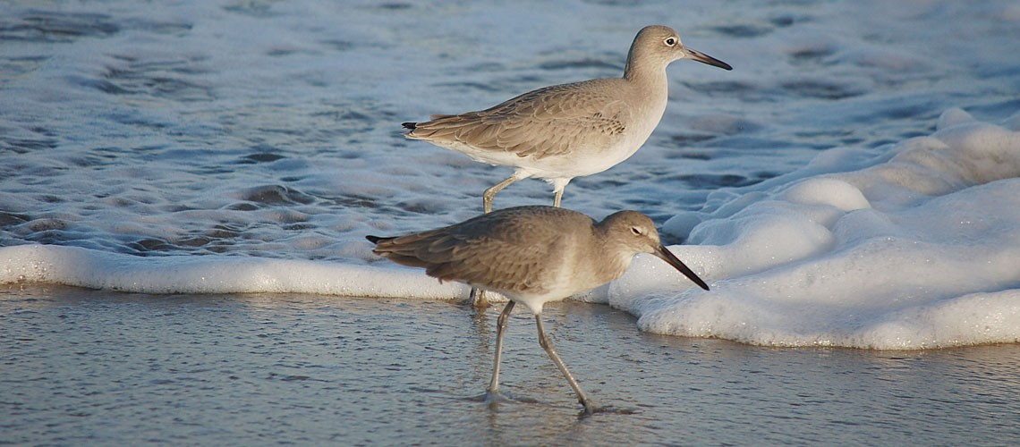 spotted sandpipers slider