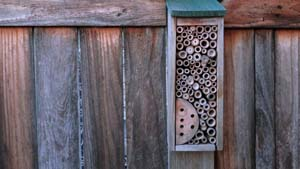 Image of bee hotel
