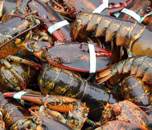 lobster_featured