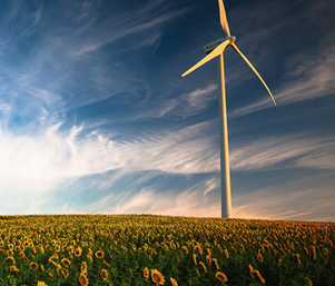 wind_turbine_sunflowers_featured