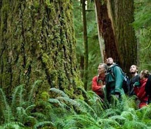 Action Alert Save Urban Forests Now American Forests >> Can American Forests Save The Planet Rachel Carson Council