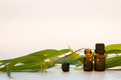 Eucalyptus extract and leaves are alternative pest repelents for better health