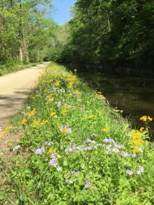 Image of spring flowers blooming along the C & O canal