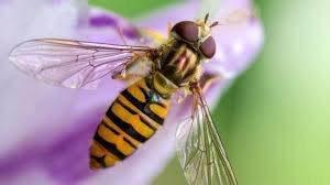 closeup image of bee