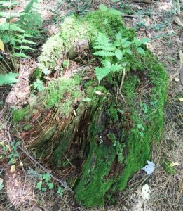 image of fern and moss covered rock