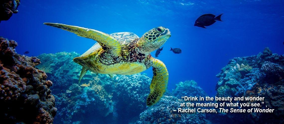sea turtle slider caption