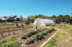 Image of organic food farm
